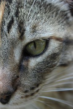 The whiskers on a cat's face are used to help him navigate in restricted spaces or in darkness...