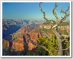 Grand Canyon - North Rim.....more amazing than you can imagine.