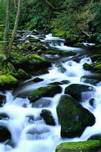 Little Pigeon River running through Great Smoky Mountains  One of the best vacations of my life