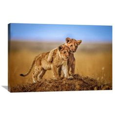 """Global Gallery 'Brothers For Life' by Jeffrey C. Sink Photographic Print on Wrapped Canvas Size: 24.1"""" H x 36"""" W x 1.5"""" D"""
