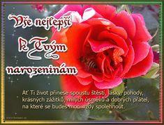 Přání k narozeninám 020 animace Christopher Smith, Rose, Flowers, Plants, Pink, Florals, Roses, Planters, Flower