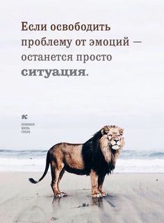Понимаем жизнь глубже. Value Quotes, Wise Quotes, Motivational Quotes, Inspirational Quotes, Bien Dit, Truth Of Life, Clever Quotes, Different Quotes, Life Motivation