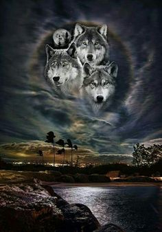 Native American Wolf, Native American Images, Native American Artwork, Wolf Images, Wolf Photos, Wolf Pictures, Indian Wolf, Wolf Photography, Wolf Artwork