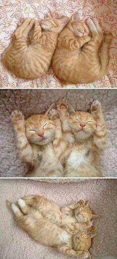 So schlafen wir .....