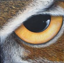 great horned owl, eye