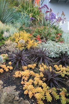 "Dyckia 'Cactus Ranch Red"" and Sedum nussbaumerianum by David Feix Landscape Design, via Flickr"