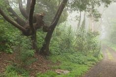 Mount Sutro (link to: Yes, There Are Places to Hike in San Francisco - The Bold Italic - San Francisco)