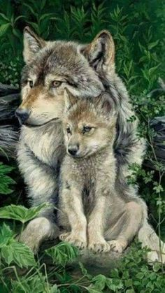 Mama Wolf mit ihrem Welpen Best Picture For Cutest Baby Animals so cute For Your Taste You are looki Wolf Images, Wolf Photos, Wolf Pictures, Nature Photos, Cute Wild Animals, Animals And Pets, Strange Animals, Wolf Spirit, Spirit Animal