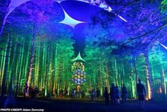 Electric Forest.  5 more months.