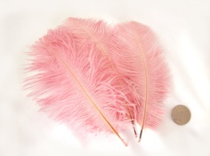 DUSTY ROSE Pink Ostrich Feather Drab  Wholesale DIY by pegasus22, $20.00