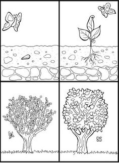 Apple Tree Coloring Page Fresh Coloring Page Cycle Appletree Free Printable Coloring Pages Peter Pan Coloring Pages, Coloring Pages For Kids, Plant Life Cycle Worksheet, Tree Life Cycle, Tree Story, Valentines Day Coloring Page, Tree Coloring Page, Story Sequencing, Apple Theme