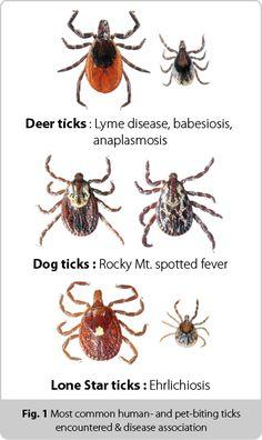 Ticks_KnownDiseases