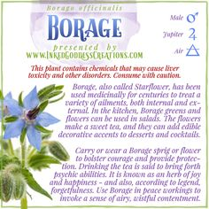 """Pronounced """"BUR-idge,"""" this versatile herb is an important addition to any garden, magickal or culinary. It's a favorite of pollinators and the perfect companion for many vegetables, especially tomatoes. // #borage #happiness #kitchenwitch #courage #protection #plantmagick #greenwitch #hedgewitch #garden #magick Plant Magic, Magic Herbs, Herbal Magic, Wiccan, Magick, Witchcraft, Pergola Planter, Witch Herbs, Kitchen Witchery"""