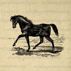 Antique Horse Image Printable Download Digital Graphic Illustration Vintage Clip Art. High resolution digital illustration for printing, iron on transfers, pillows, t-shirts, tea towels, papercrafts, and other great uses. Antique artwork. This digital image is high quality at 8½ x 11 inches large. Transparent background version included with every digital image.