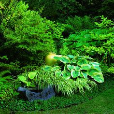 love Japanes forest grass with hostas great with those conifers for year round interest & the pottery pops