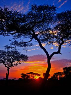 African Sunrise ~ breathtaking view of the Serengeti, north Tanzania by hbp_pix
