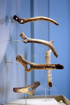 Ice Age Art: The Arrival of the Modern Mind exhibition at British Museum. Perforated antler batons decorated with drawings, possibly symbols of power.
