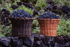 Volcano Wine in the Azores, Portugal - via National Geographic Traveler 18.10.2013 | Six centuries on, travelers are increasingly exploring the vineyards of the Azores, especially Pico Island (the archipelago's second largest) with a landscape so intricate and unusual UNESCO declared it a World Heritage site. Photo: Grapes harvested on Pico Island (Photograph by Tony Arruza/Alamy)