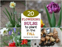 Know Your Zone and Get Digging Don't miss out! Fall is the time to plant flowering bulbs for late winter, spring, and summer blooms.  There are hundreds of choices of bulbs. What will work in your garden...