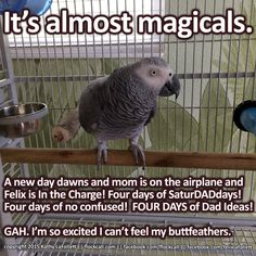 I've had days like this!!! Sometimes I can't feel MY butt feathers either!!