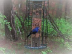 The Joy of Bird Watching and Living a Simple Life: Happy Easter!