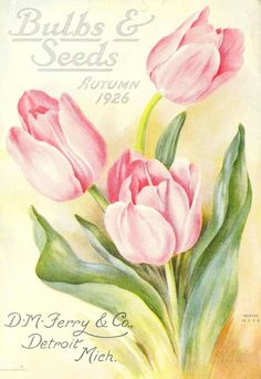Bulbs and Seeds 19126 Tulip Cover Canvas Art - Unknown X Vintage Diy, Vintage Cards, Vintage Postcards, Vintage Images, Flower Prints, Flower Art, Bulbs And Seeds, Vintage Seed Packets, Seed Packaging