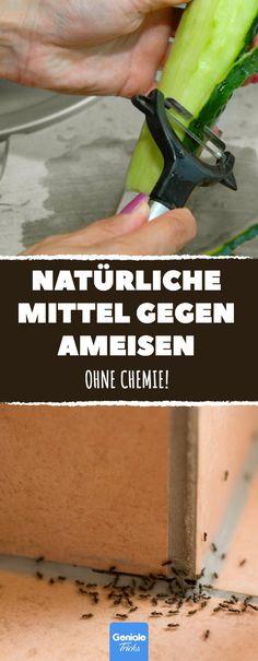 Natürliches Mittel Gegen Ameisen : projekt ameisen und krabbeltiere ~ Whattoseeinmadrid.com Haus und Dekorationen
