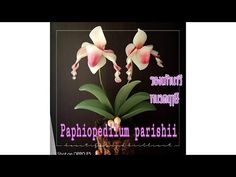 EP 140 :lady slipper orchids How to make nylon/stocking flower by ployan. Nylon Flowers, Fabric Flowers, Lady Slipper Orchid, Pipe Sizes, White Leaf, Nylon Stockings, Recycled Crafts, Womens Slippers, Orchids