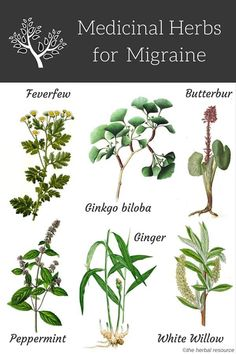Benefits, health properties, active ingredients and side effects of medicinal herbs as herbal remedies for natural migraine headache treatment and relief Natural Headache Remedies, Natural Health Remedies, Natural Cures, Natural Healing, Herbal Remedies, Natural Treatments, Natural Foods, Cold Remedies, Natural Beauty