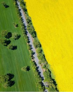 Canola Field, Countries Of The World, Planet Earth, South America, Lush, Fields, Chile, The Good Place, Travel Inspiration