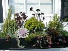 Coole Dekorationsideen mit Sukkulenten für den Außenbereich