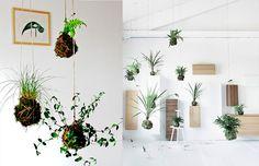 Teoricamente, todas as plantas podem virar um kokedama, assim como teoricamente todas podem virar bonsai. Mas existem plantas - como no bonsai - que se adaptam melhor e mais facilmente ao arranjo. É bom pesquisar bastante.