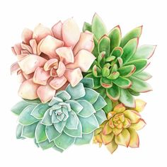Succulent Art Illustration Watercolor Painting 45 Ideas For 2019 Botanical Art, Botanical Illustration, Illustration Art, Illustrations, Watercolor Succulents, Watercolor Flowers, Watercolor Print, Watercolor Paintings, Ink Painting