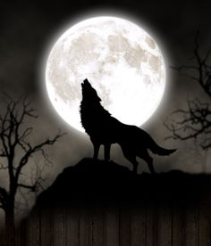 Full moon - Full moon You are in the right place about diy face mask sewing pattern Here we offer you the most - Wallpaper Lobos, Wolf Wallpaper, Animal Wallpaper, Wolf Images, Wolf Pictures, Dark Art Drawings, Cute Animal Drawings, Desenho New School, Madara Wallpaper