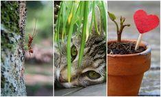 Van kéznél eceted? Tucatnyi ötletet mondunk, hogy mi mindenre használhatod a kertben! – morzsaFARM