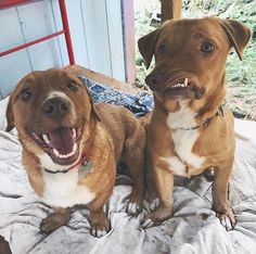 Picasso and Pablo are brothers who were born to a backyard breeder. But after their birth, Pablo, along with the rest of the litter, were sold off to different families. Rescue Dogs, Animal Rescue, Pet Dogs, Dogs And Puppies, Dog Cat, Doggies, Picasso, Leiden, Dog Pictures