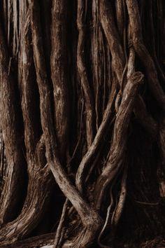 """marjoleinhoekendijk: """" ☽♡☾ Pagan, Viking, Nature and Tolkien things ☽♡☾ """""""
