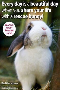 If you don't think that bunnies are cute then you have no life. ;)