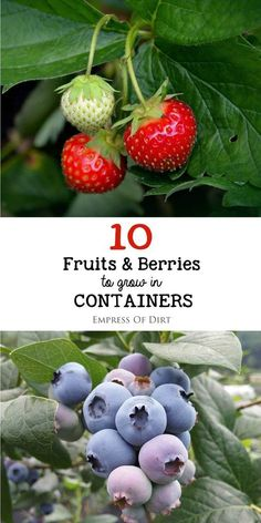There are lots fruit trees and berry bushes that do well in containers. Pick…