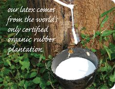 renewable materials organic latex