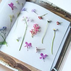 * P R E S S * Bought my daughter a flower press last summer, so reading #thecraftedgarden to find out a little more, ready to press flowers this year! #flowermagic #flowerpressing