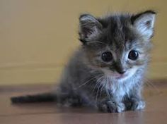 cute cats and kittens - Yahoo Image Search Results Little Kittens, Kittens Cutest, Cats And Kittens, I Love Cats, Cute Cats, Funny Cats, Animals And Pets, Baby Animals, Cute Animals