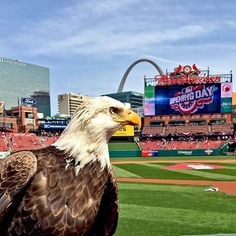 America's pastime. ⚾️ opening day 2016 at Busch