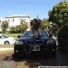 Hilarious! That's what you get for trying to be all sexy & shit. Now get off the fucking car, bitch.