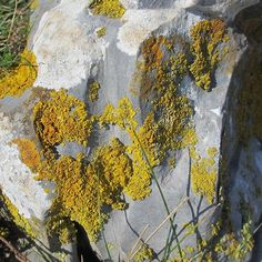 Lichen on a rock at Pennard Cliffs on the Gower Peninsula - lovely fresh air anyone? Gower Peninsula, Cliff, Wreaths, Fresh, Holidays, Rock, Painting, Instagram, Vacations