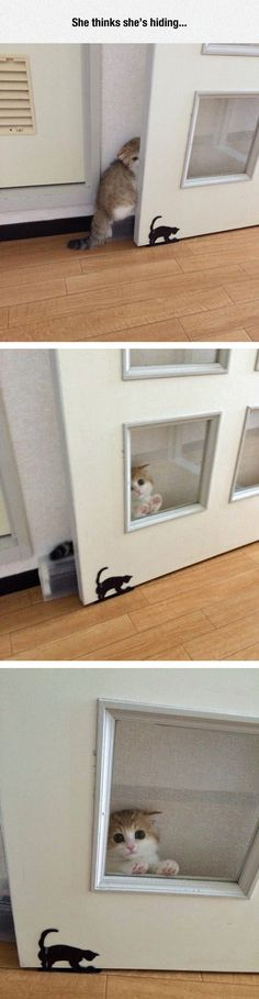 Kitty Thinks She's Hiding funny cat cats kitten cute cat funny pictures funny animal pictures