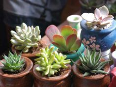 Many people don't know how to grow succulents indoors and what type of soil to use. Unlike other plants they don't use the same soil. The soil needed for...