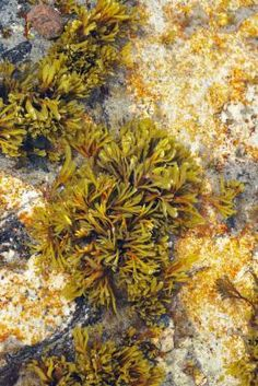Is Seaweed Salad Healthy?