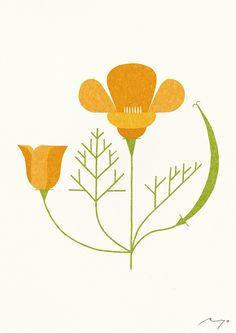 California Poppy - Ryo Takemasa - born 1981 - illustrator - Japan