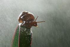 rainy snail by Vadim Trunov, via 500px